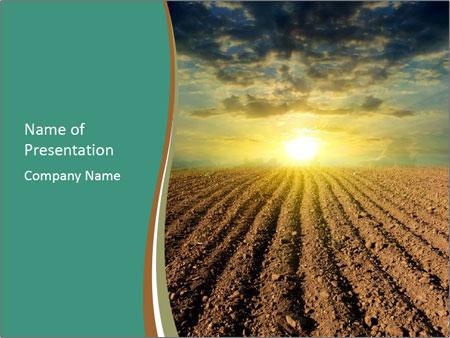 Sunrise In Wineyard PowerPoint Template