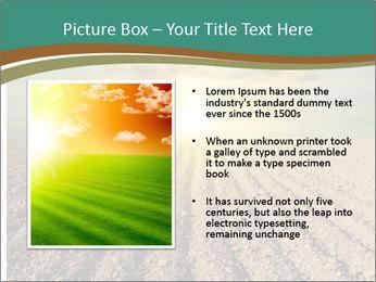 Sunrise In Wineyard PowerPoint Template - Slide 13