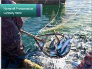 Fishery Season PowerPoint Template