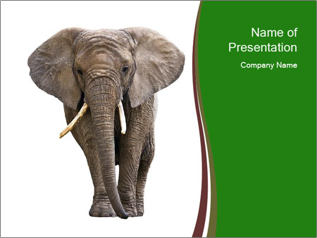 Elephant On White Background Powerpoint Template Backgrounds Id