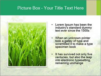 Spring Mood PowerPoint Template - Slide 13