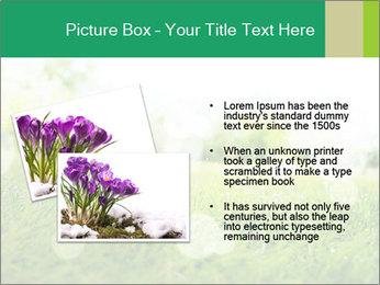 Spring Mood PowerPoint Template - Slide 20
