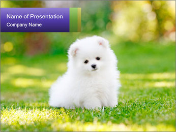 White Little Puppy PowerPoint Template