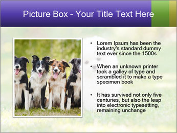 White Little Puppy PowerPoint Template - Slide 13