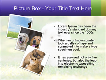 White Little Puppy PowerPoint Template - Slide 17