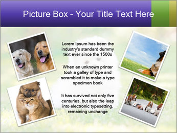 White Little Puppy PowerPoint Template - Slide 24