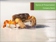 A crab on the beach. PowerPoint Template