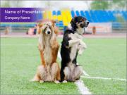 Two dogs on the football field PowerPoint Template