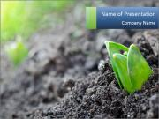 Young sprout in garden PowerPoint Template