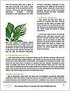 0000089846 Word Template - Page 4