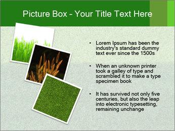 Grass field PowerPoint Template - Slide 17
