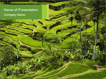 Chinese Tea Plantation PowerPoint Template - Slide 1