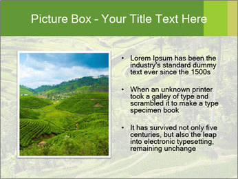Chinese Tea Plantation PowerPoint Template - Slide 13