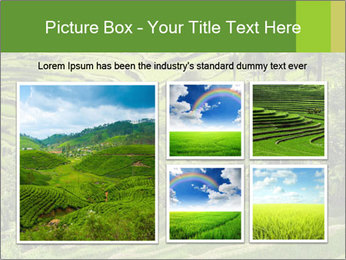 Chinese Tea Plantation PowerPoint Template - Slide 19