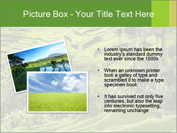 Chinese Tea Plantation PowerPoint Template - Slide 20