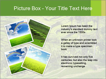 Chinese Tea Plantation PowerPoint Template - Slide 23