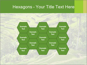Chinese Tea Plantation PowerPoint Template - Slide 44