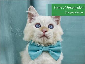 Beautiful white cat PowerPoint Template - Slide 1