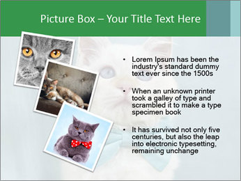 Beautiful white cat PowerPoint Template - Slide 17