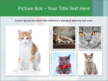 Beautiful white cat PowerPoint Template - Slide 19