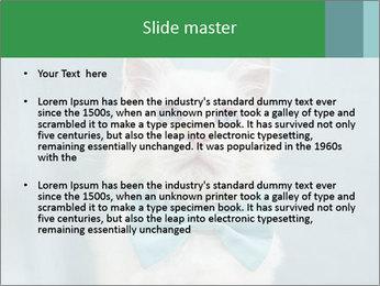 Beautiful white cat PowerPoint Template - Slide 2