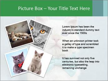 Beautiful white cat PowerPoint Template - Slide 23