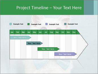 Beautiful white cat PowerPoint Template - Slide 25