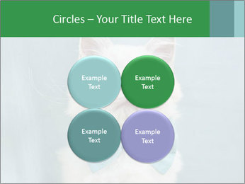 Beautiful white cat PowerPoint Template - Slide 38