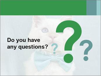Beautiful white cat PowerPoint Template - Slide 96