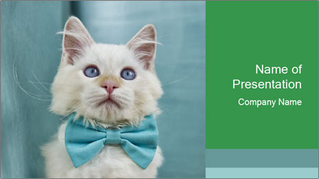 Beautiful white cat PowerPoint Template