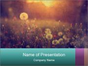 Spring Field Flowers PowerPoint Template