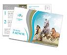 Three beautiful horses running Postcard Templates