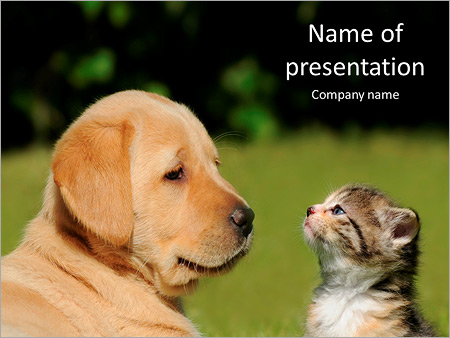 Friendship cats and dogs powerpoint template backgrounds google friendship cats and dogs powerpoint template toneelgroepblik Choice Image