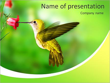 hummingbird powerpoint template backgrounds google slides id