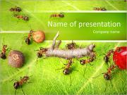 Trennlinie und Frachtverkehr bei Ameisen Pfad in Ameisenhaufen, Teamarbeit PowerPoint-Vorlagen