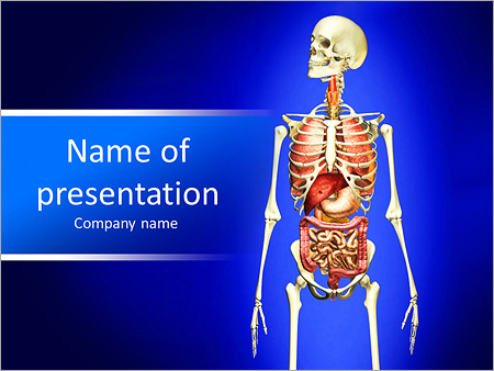 man skeleton with internal organs. 3 d digital rendering, Modern powerpoint