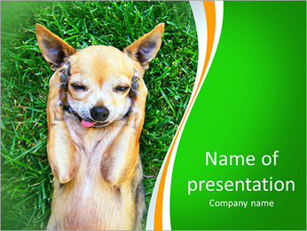 A cute chihuahua with his paws on his head covering his ears PowerPoint Template