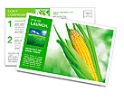Corn field Postcard Template