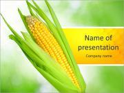Champ de maïs Modèles des présentations  PowerPoint
