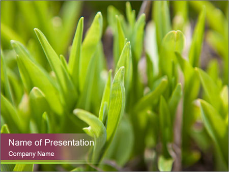 Green shoots of grass background PowerPoint Template