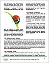 0000090006 Word Template - Page 4