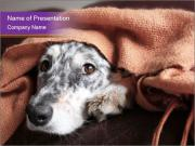 Sick Dog PowerPoint Template