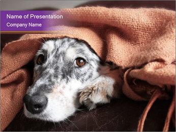 Sick Dog PowerPoint Template - Slide 1