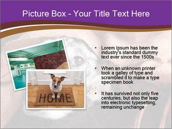 Sick Dog PowerPoint Template - Slide 20