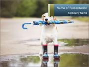 Dog With Umbrella PowerPoint Template