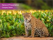 Wild Cat PowerPoint Templates