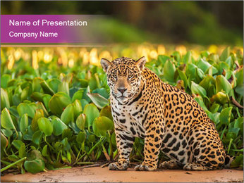 Wild Cat PowerPoint Template - Slide 1