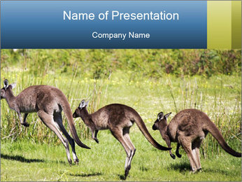 Three Kangaroos PowerPoint Template - Slide 1