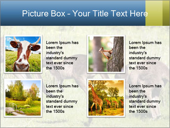 Three Kangaroos PowerPoint Template - Slide 14