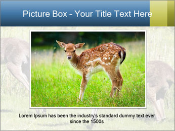 Three Kangaroos PowerPoint Template - Slide 16
